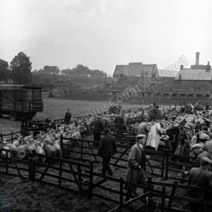 Sheep Sale, Masham